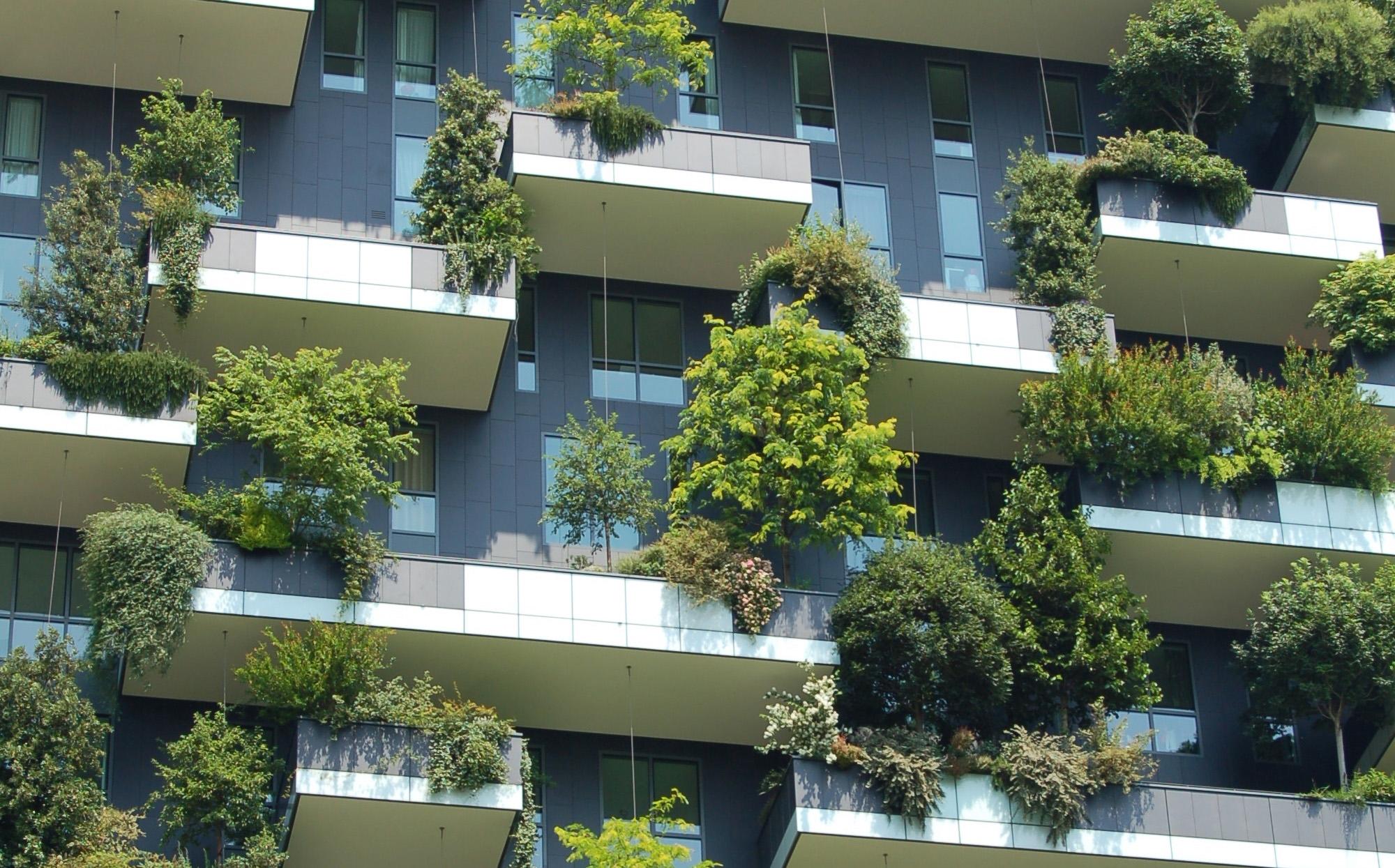 Bomen op gebouw