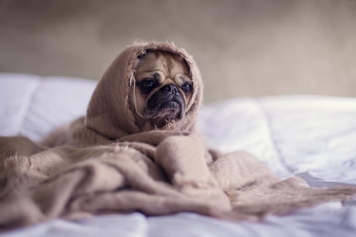 verdrietige hond