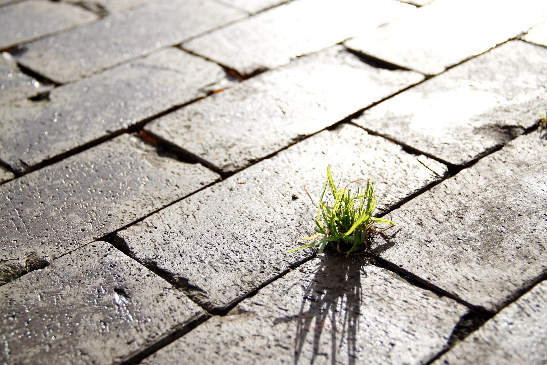 groen plukje gras in de straat